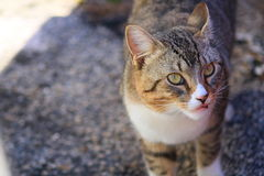 Cat. In Delray beach, Florida, Palm beach Royalty Free Stock Photos