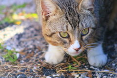 Cat. In Delray beach, Florida, Palm beach Royalty Free Stock Image