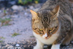 Cat. In Delray beach, Florida, Palm beach Royalty Free Stock Photo