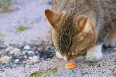 Cat. In Delray beach, Florida, Palm beach Stock Image
