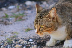 Cat. In Delray beach, Florida, Palm beach Stock Photos