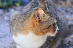 Cat. In Delray beach, Florida, Palm beach Stock Images