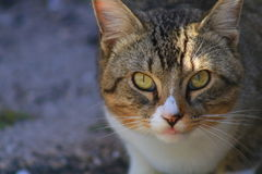 Cat. In Delray beach, Florida, Palm beach Stock Photography