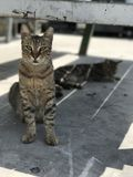 Cat at depth of field. Cat posing, depth of field shot Stock Image