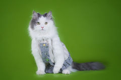 Cat-designer presents his collection of clothes Stock Photo