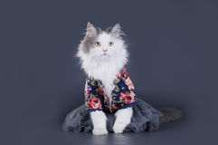 Cat-designer presents his collection of clothes Royalty Free Stock Photo