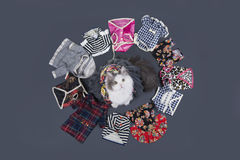 Cat-designer presents his collection of clothes. Royalty Free Stock Photos