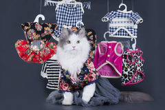 Cat-designer presents his collection of clothes Stock Image