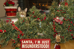 Cat Destroys Christmas. A cat knocks over the Christmas Tree Royalty Free Stock Image