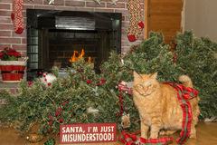 Cat Destroys Christmas. A cat knocks over the Christmas Tree Royalty Free Stock Photography