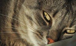 Cat detail Royalty Free Stock Photo