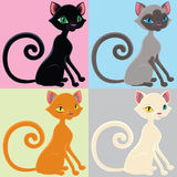 Cat of different color Royalty Free Stock Image