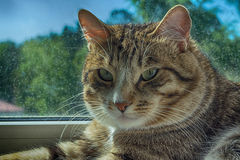 Cat. The cat after dinner is heated in the sun Stock Photography