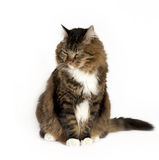 Cat with Disdainful Expression stock images