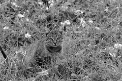 Cat in disguise. Cat gazing at the camera Stock Photos