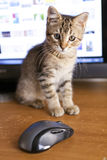 Cat with Display Stock Photography