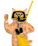 Cat diver. Stock Photo