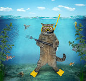 Cat diver 2 Royalty Free Stock Images