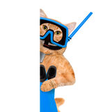 Cat diver. Stock Photography