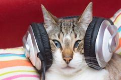 CAT DO DJ Foto de Stock Royalty Free