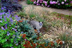CAT DO JARDIM Imagens de Stock Royalty Free