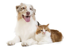Cat and doc Royalty Free Stock Image