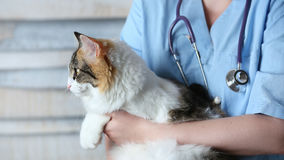 Cat in doctor arms Stock Image