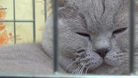 The sleepy cat stock footage