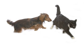 Cat and dog. Black cat and brawn dog playing together Royalty Free Stock Images