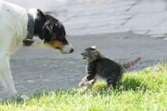 Cat and dog. (dog want to be friend Royalty Free Stock Photos