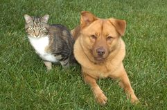 Cat and Dog. On the grass Stock Image