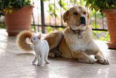 Cat and dog. A cat and a dog at the entrance Stock Photos