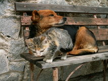 Cat and dog. Friends or no Royalty Free Stock Photography