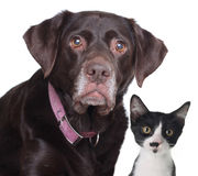 Cat and dog Royalty Free Stock Image