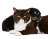 Cat and dog. Cat and dog isolated on a white background Royalty Free Stock Photography