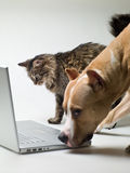 Cat and Dog Stock Image