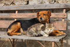 Cat and dog. Are waiting resting Stock Image