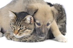 Cat and dog Royalty Free Stock Photography