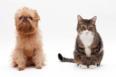 Cat and dog Stock Photos