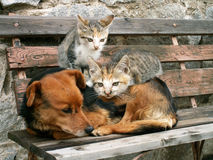 Cat and dog. Two young cats and dog are friends Stock Photo