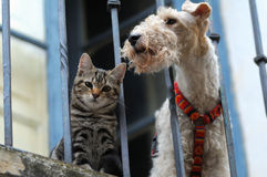 Cat and a dog. A cat and a dog in the balcony Royalty Free Stock Images