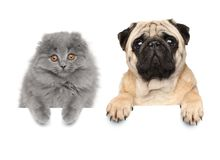 Cat and dog above banner Royalty Free Stock Image