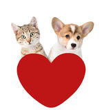 Cat and Dog above red heart. isolated on white background.  Royalty Free Stock Photo