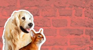 Cat and dog, abyssinian kitten , golden retriever looks at right in front of bright brick wall. Cartoon zine retro style.  stock photos