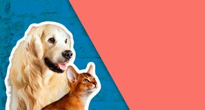 Cat and dog, abyssinian kitten , golden retriever looks at right in front of bright brick wall. Cartoon zine retro style.  stock photography