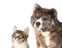 Cat and dog Royalty Free Stock Photos