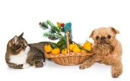 Cat, Dog And Christmas Basket Royalty Free Stock Photos