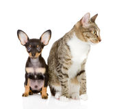 Cat with a dog attentively look in the camera. Stock Images