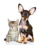 Cat with a dog attentively look in the camera. Isolated on white background stock photo