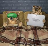 Cat with a dog in bed. The dog in a sleeping mask and the cat with a laptop are in bed together royalty free stock image